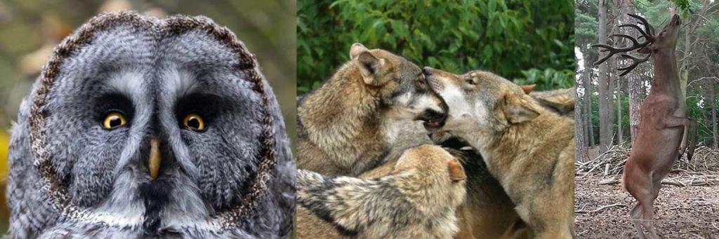 Bürgermeister Kliewe appelliert an Landesregierung: Ueckermünder Tierpark unter Auflagen öffnen