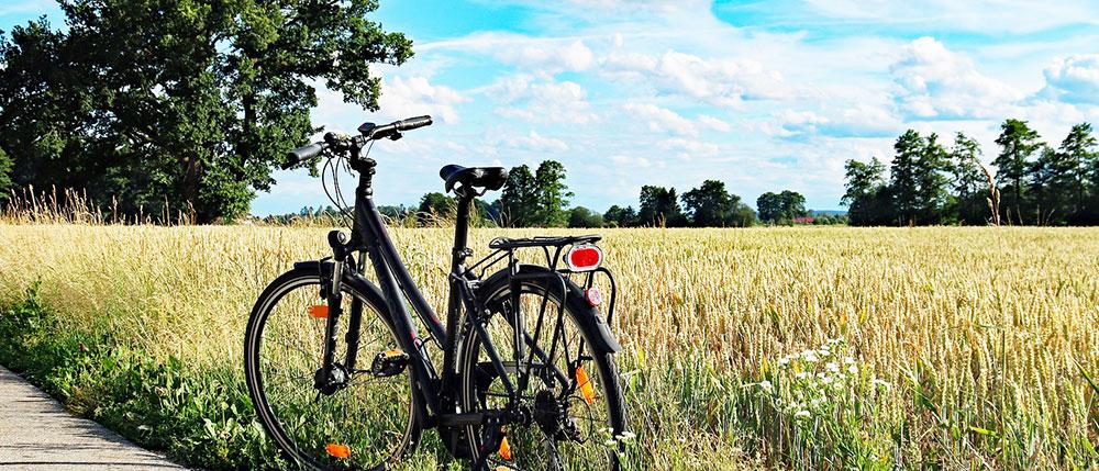 Lust auf eine Radtour durch die Ueckermünder Heide?