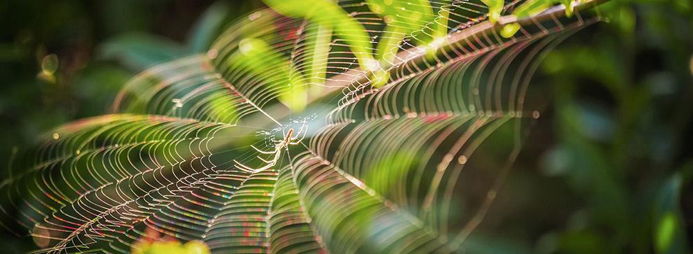 Was haben Spinnen aus Namibia mit der Antibiotika-Forschung zu tun?