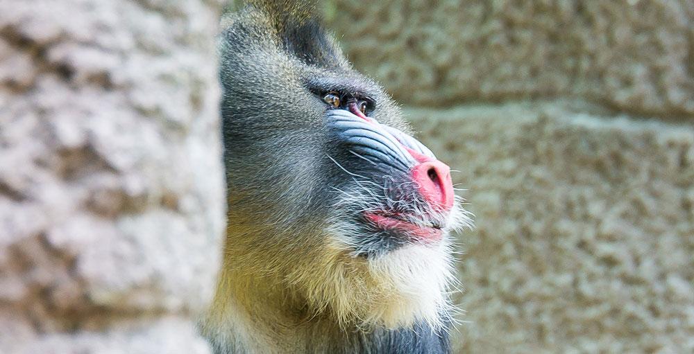 Verschenken Sie noch mehr Erlebnisse mit der Tierparkjahreskarte