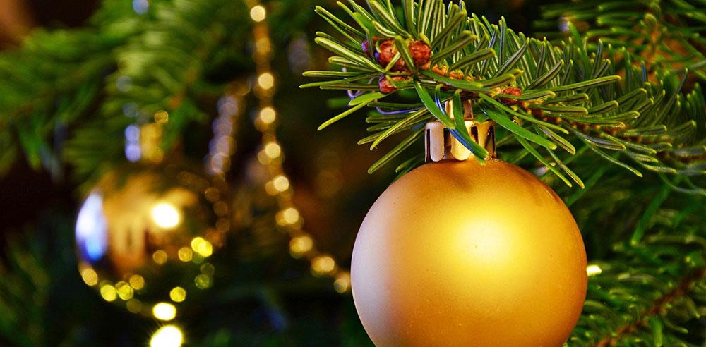 Haben Sie Ihren Weihnachtsbaum schon ausgesucht?