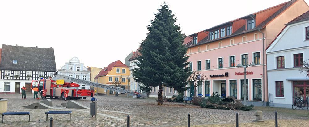 Ueckermünder Tanne adé