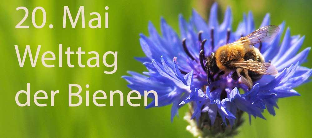 Eine Welt ohne Bienen! Undenkbar!