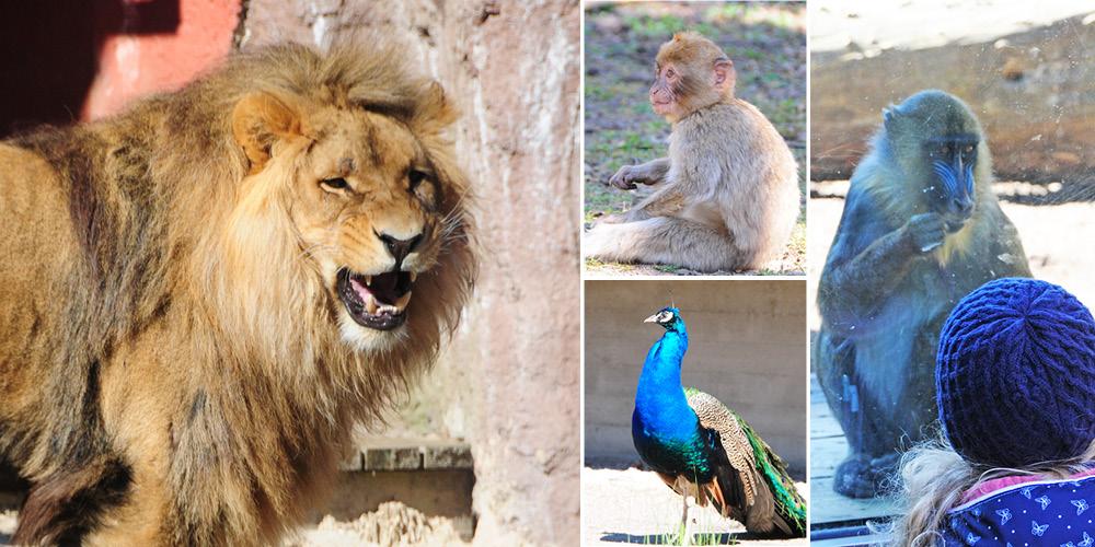 Zoo spannend – Tierpark begeistert Groß und Klein