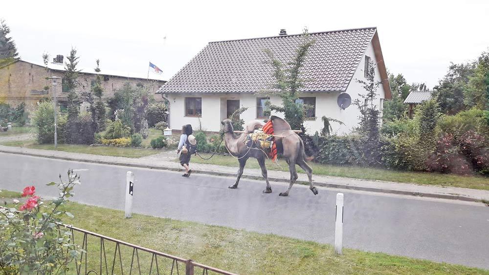 Mit einem Kamel von Polen über Luckow nach Frankreich
