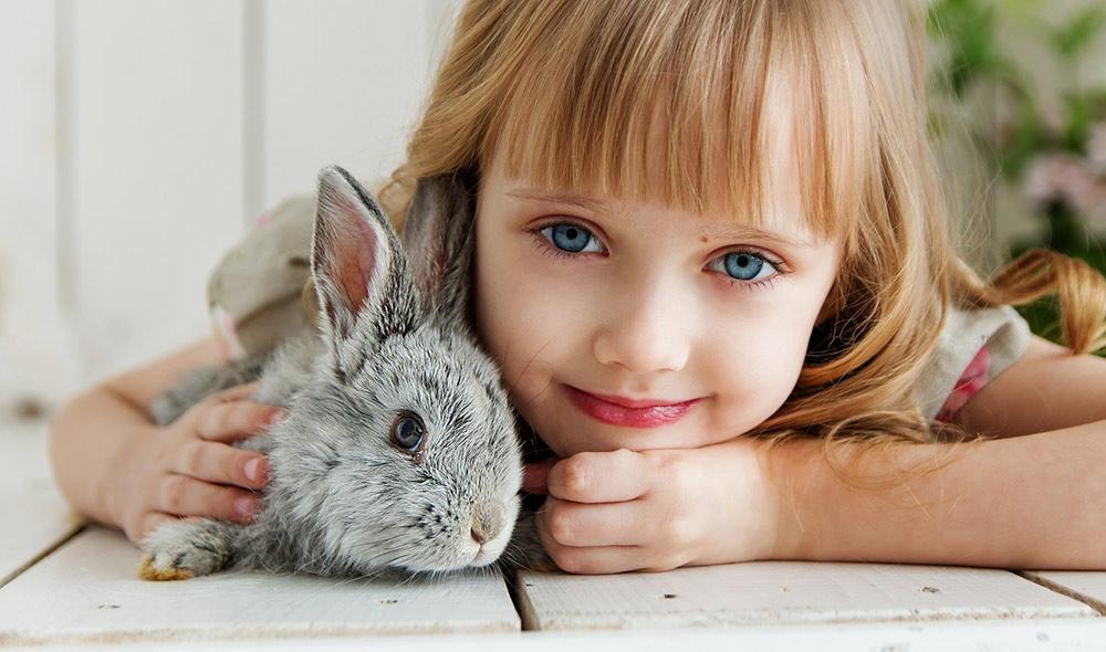Kreisschau: Kaninchen-Fans nach Eggesin eingeladen