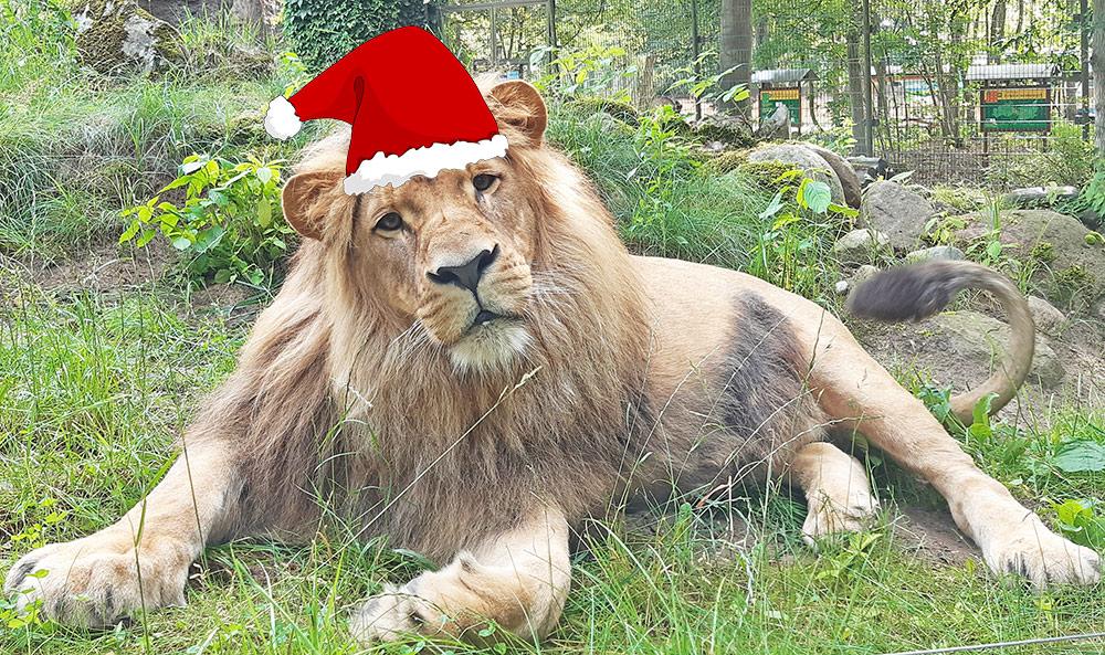 Geschenkidee: Jetzt Jahreskarte für den Ueckermünder Tierpark sichern