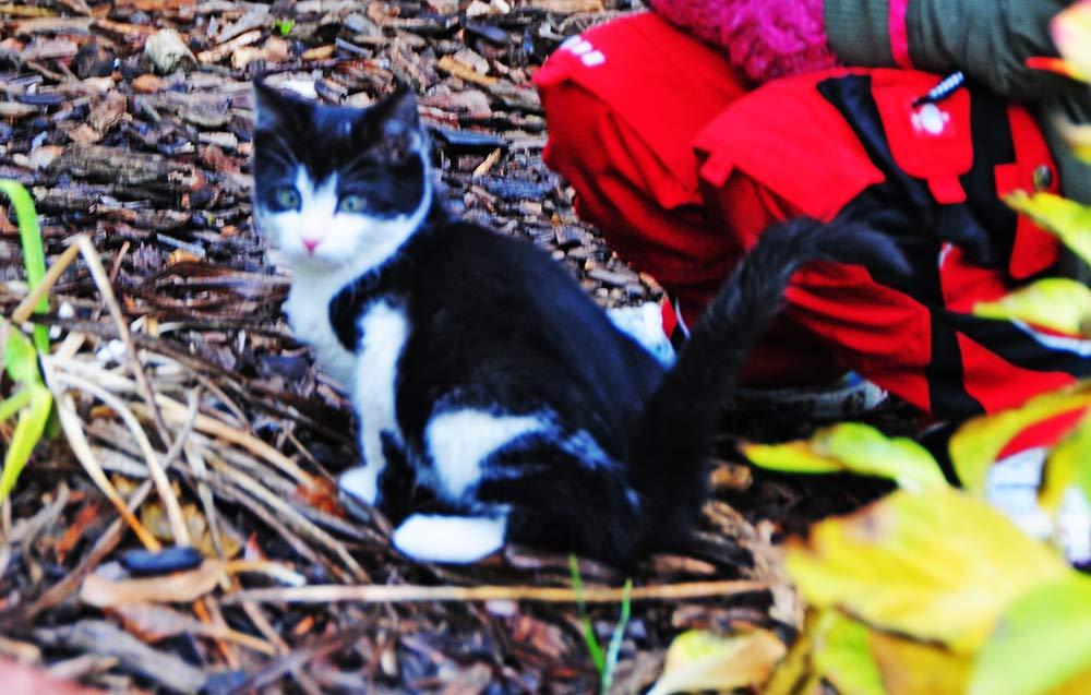 Junge Katzenmama vermisst ihren Kater: Wer hat Flecki gesehen? (aktualisiert)