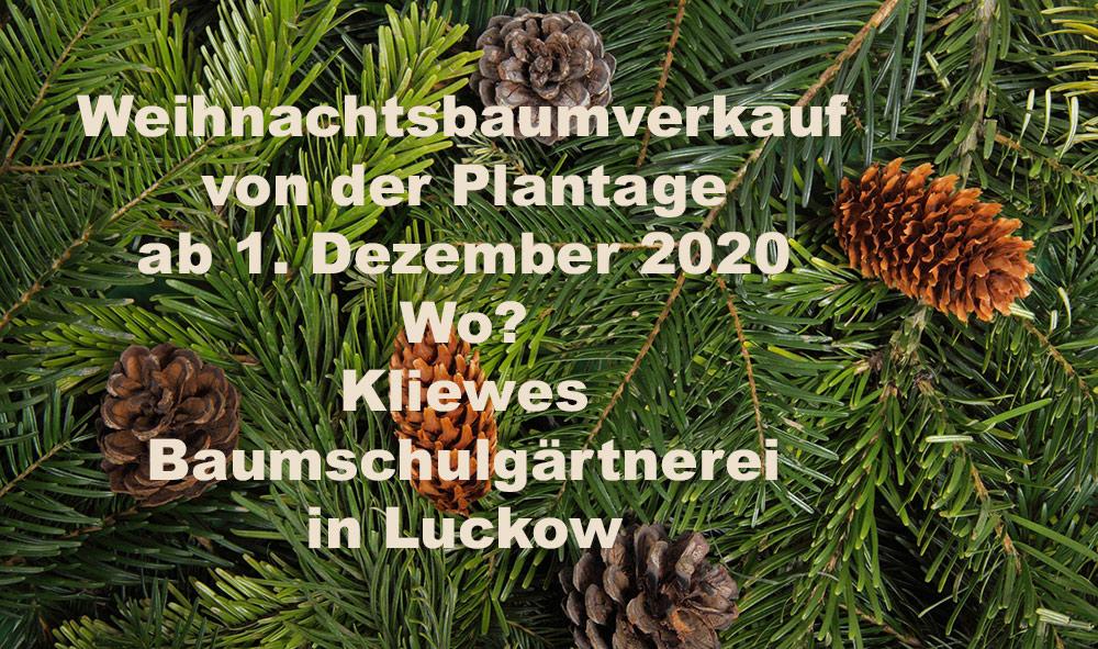 Weihnachtsbäume direkt von der Plantage