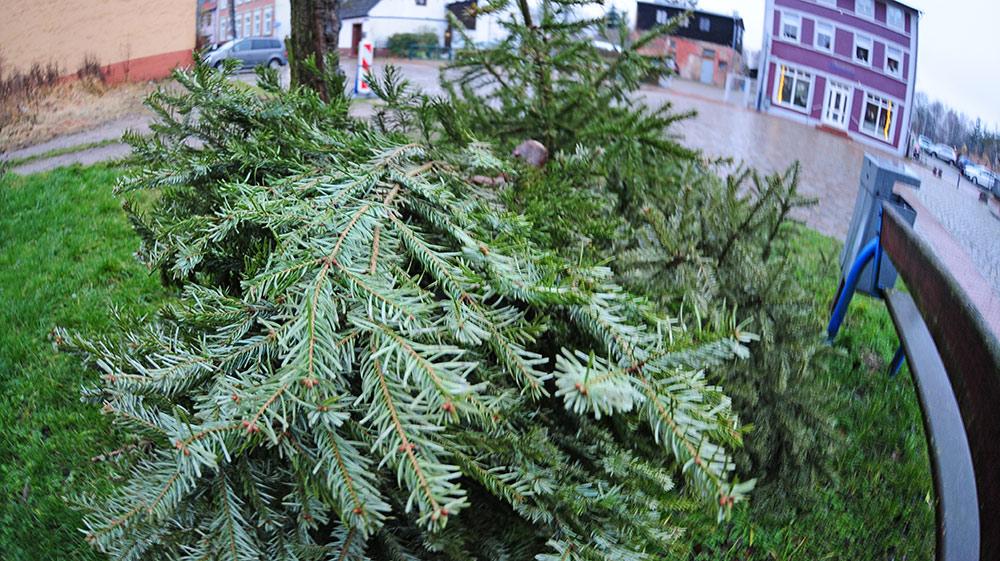 So werden Sie Ihren Weihnachtsbaum los!