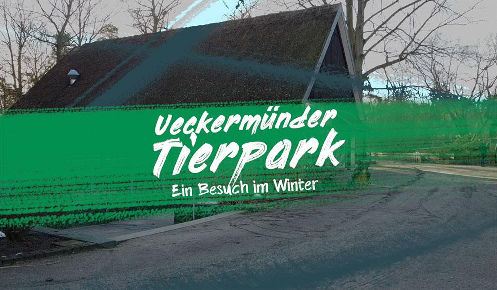 Auf geht's zu einem virtuellen Tierparkbesuch im Winter!