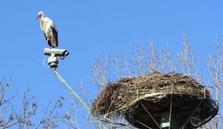 Der erste Storch ist da – so früh wie noch nie