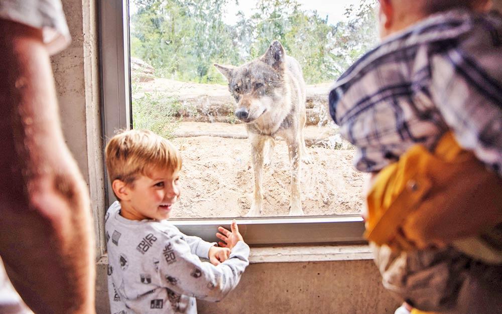 Sommerferien-Programm im Tierpark: Rein ins tierische Vergnügen!