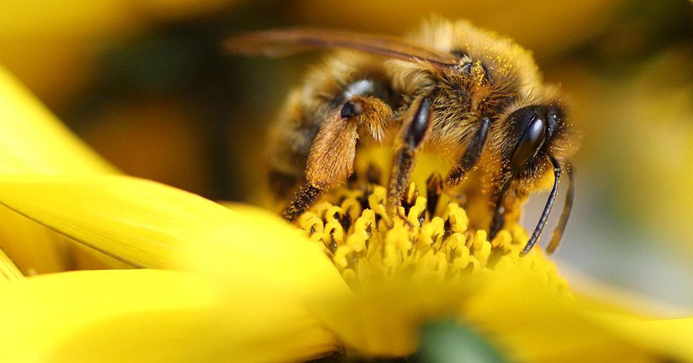 Biene Sumsi und ihre Familie laden zum Besuch beim Imker ein